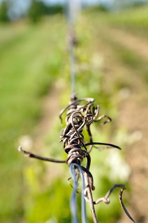 fil-de-fer-vigne
